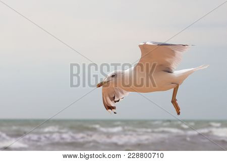 Big Gull In Sky Looking Around And Flying Up Over Sea. Sky Landscape