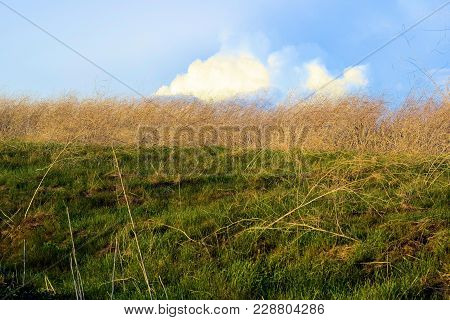 Lush green rural grasslands taken at a field in a prairie with cumulus clouds beyond poster