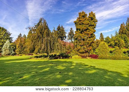 Lawn Of Green Grass With Various Trees And Beautiful Bushes In The Background, A Blue Summer Sky Wit