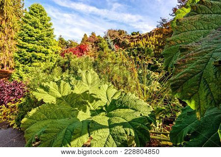 Huge Green Leaves Of Burdock, Trees And Beautiful Bushes In The Background, A Blue Summer Sky With C