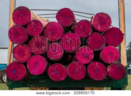 Logs On A Truck Panited Pink Ready To Be Milled.
