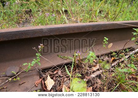 The Old Railroad Tracks Of The Valdai-krattsy Line. Krestetsky District, Novgorod Region Russia. Was