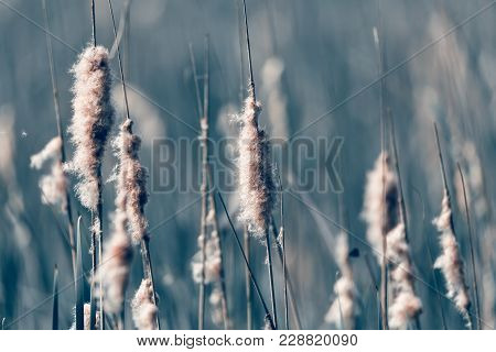 Reeds At The Pond, Abstract Background
