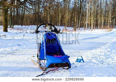 Sports Sledding With Dogsled On Skis. Races Sleds