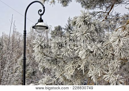 Snowy Street Lamp On A Clear Winter Day. Vintage Style. Focs On The Pine Branch Covered With Thick F