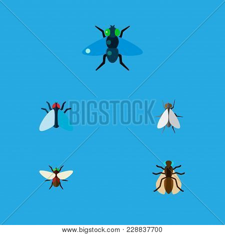 Icon Flat Housefly Set Of Gnat, Tiny, Dung And Other Vector Objects. Also Includes Fly, Bluebottle,