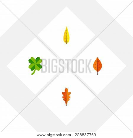 Icon Flat Leaf Set Of Leaf, Hickory, Oaken And Other Vector Objects. Also Includes Leaf, Foliage, Hi