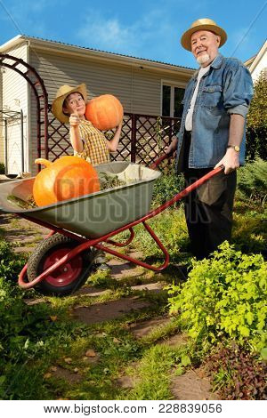 Happy grandpa and his grandson harvest of pumpkins in the garden. Sunny autumn day.
