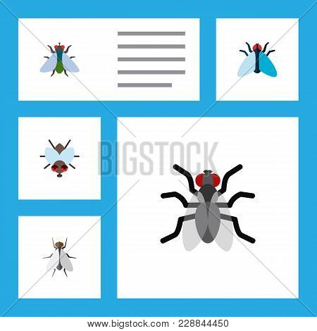 Icon Flat Fly Set Of Mosquito, Tiny, Insect And Other  Objects. Also Includes Fly, Insect, Hum Eleme