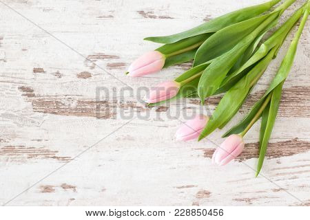 Pink Tulips On Bright Rustic Wooden Background