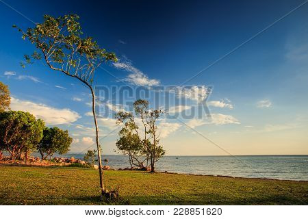 Lacy Trees On Beach Lawn Sunlight Through Branches At Sunset