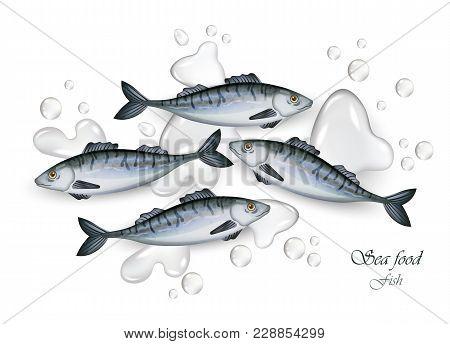 Sprat Fishes Vector Realistic Fresh. Water Splash 3d Illustration