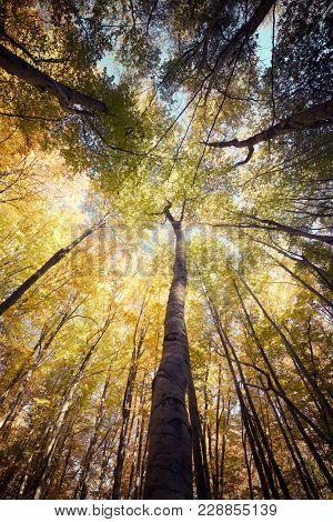 Autumn in Tena Valley, Pyrenees, Huesca, Aragon, Spain.