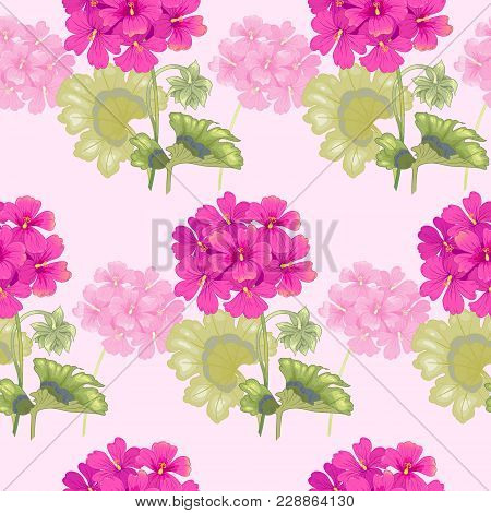 Background With Geranium Flowers. Seamless Pattern. Illustration Victorian Style. Vintage. Vector. D