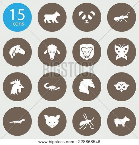 Set Of 15 Zoo Icons Set. Collection Of Lion, Pig, Scorpion And Other Elements.
