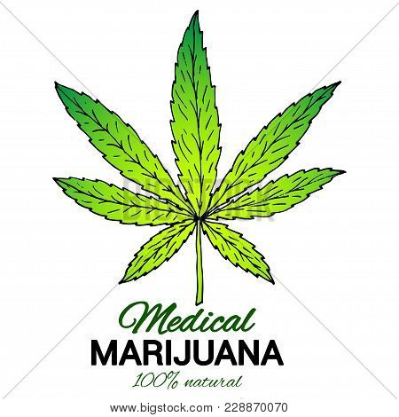 Illustration of medical marijuana. Suitable for use by cannabis producers in the design of packaging, advertising, posters.