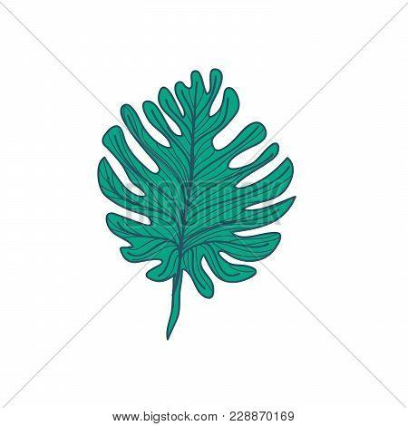 Lobed Tropical Leaf Hand Drawn Vector Illustration Design