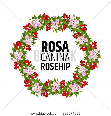 Wreath Of Rose Hips. Decorative Element With Briar Ornament. Vector.