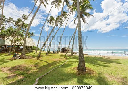 Koggala Beach, Sri Lanka, Asia - Palm Trees On A Meadow At Koggala Beach