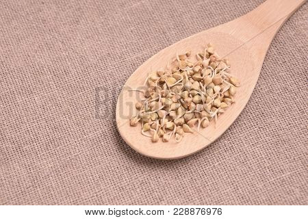 Buckwheat Sprouts. Light Wooden Spoon. Neutral Background.