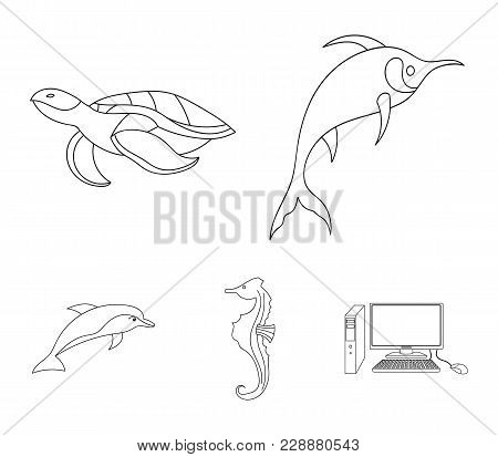 Merlin, Turtle And Other Species.sea Animals Set Collection Icons In Outline Style Vector Symbol Sto