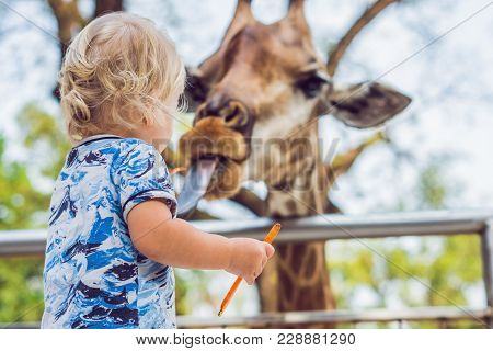 Little Kid Boy Watching And Feeding Giraffe In Zoo. Happy Kid Having Fun With Animals Safari Park On