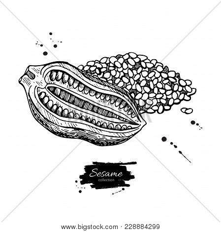 Sesame Nut And Seed Vector Drawing. Hand Drawn Food Ingredient. Botanical Sketch Of Herb. Agricultur