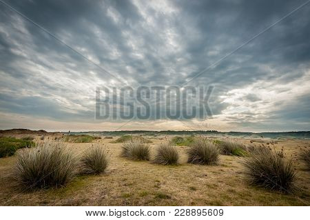 Dune Grass In The Dunes D'hattainville, Normandy Fance