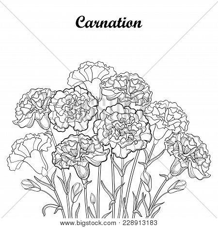 Vector Bouquet With Outline Carnation Or Clove Flower In Black, Bud And Foliage Isolated On White Ba