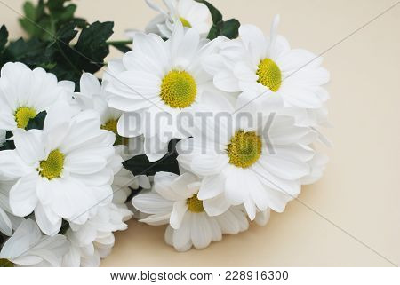 Chrysanthemum Camomile White Flower Bouquet Over Neutral Beige Background