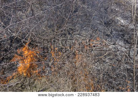 Grass Fire In The Field. Abuse Of Environment.