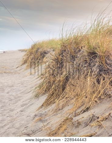 Grass Covered Sand Dunes On The Beach. This Image Was Taken At Sunset. This Is A Unique Perspective