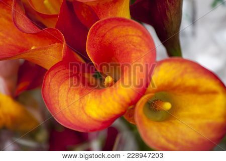 The Flower Of An Orange Calla Lily And Partial Leaf As Ornament