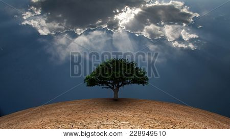 Surrealism. Green tree in arid land. Light beams comes through the clouds. 3D rendering