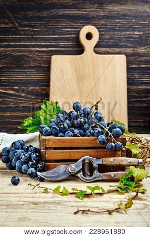Harvest blue grapes in box vine and pruner on old wooden board rustic style copyspace.