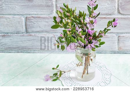 Bouquet Of Rhododendron Dauricum Against Brick Wall. Delicate Spring Flowers