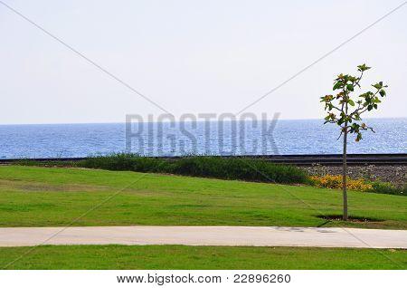 Green foreland