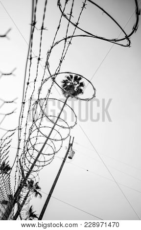 From The Ground Looking Up At Barbed Wire And Razor Wire Along A Chain Link Fence With A Palm Tree F