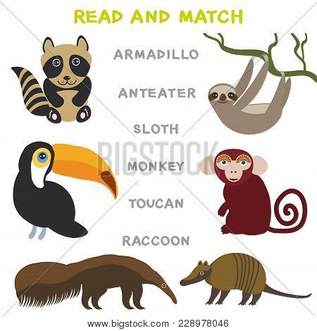 Kids Words Learning Game Worksheet Read And Match. Funny Animals Armadillo Anteater Sloth Monkey Tou