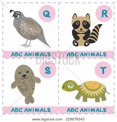 Abc Alphabet For Kids. Set Of Funny Turtle Raccoon Fur Seal Quail Cartoon Animals Character. Cards F