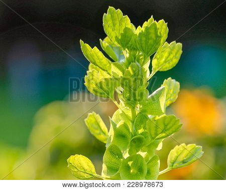 Closeup Of A Beautiful Multi Colored Light Green Wildflower In Bright Sunlight