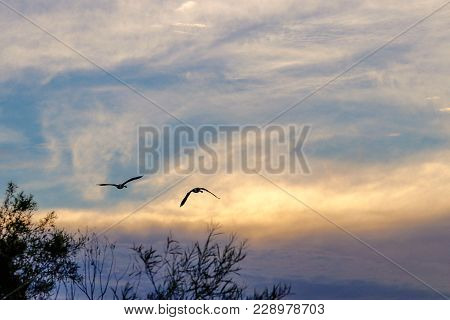 Silhouette Of Birds Flying At Sunset Over A Lake And Trees