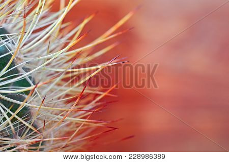Close-up Globe Shaped Cactus With Long Thorns On Blurred Wooden Background Orange Color. Copy Space.