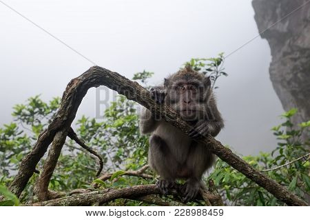Monkey Sitting On A Tree And Sadly Looking At Camera. She Is Afraid Of Crowd Of People