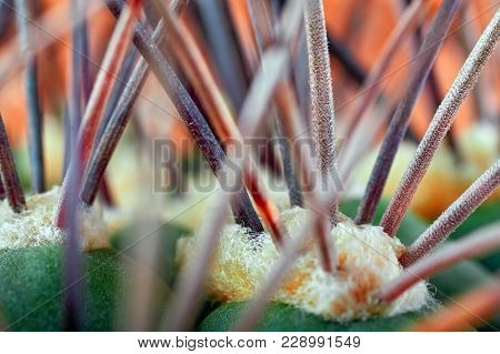 Abstract View Of Cactus Thorns. Concept Defense, Hardship. Copy Space. Horizontal Photo For Magazine