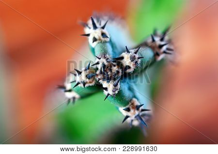 Focus On Thorn Cactus. Black Thick Spikes Close Up. Blurred Background Of Orange And Green. Succulen
