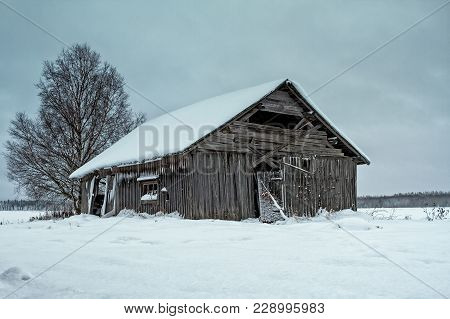 An Old Abandoned Barn House Has Been Covered With Snow On The Fields Of The Northern Finland. You Ca