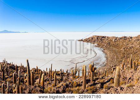 Cactus Island On Salar De Uyuni Salt Flat Near Uyuni, Bolivia
