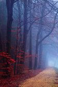 Misty evening forest with red autumn leaves poster