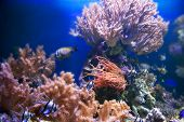 Underwater life. Coral reef, fish, colorful plants in ocean poster